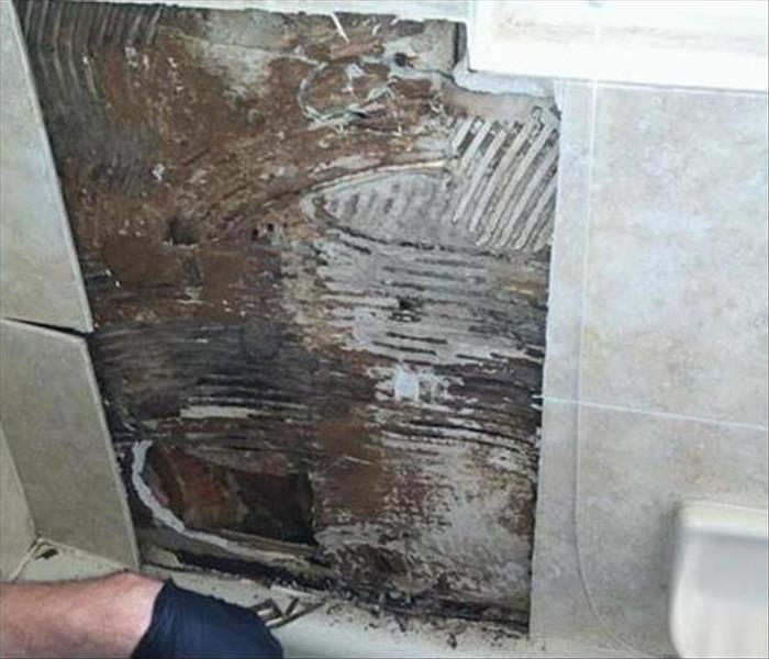 Mold Damage – Amherst Home