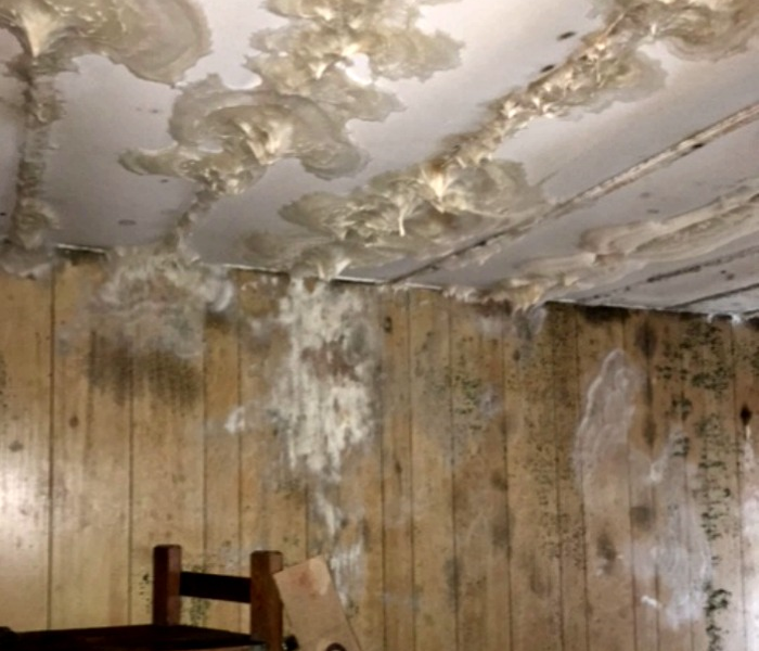 Mold Infestation in Springfield, MA Home