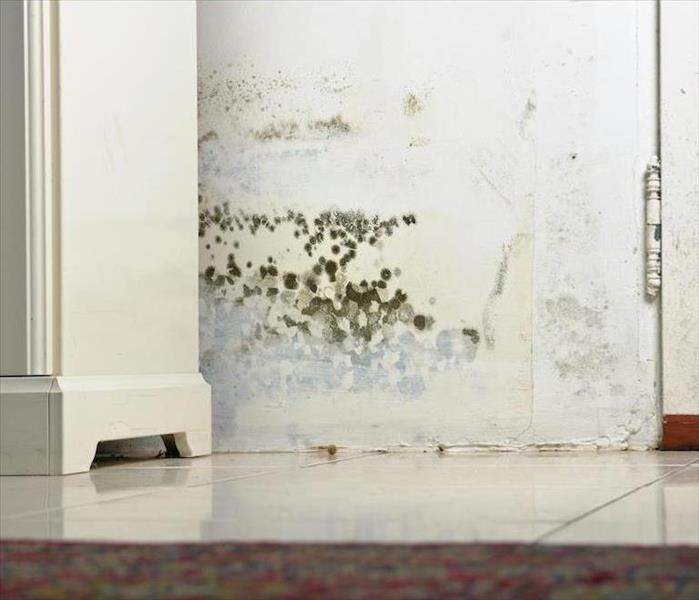 Mold Remediation Mold Damage Remediation in Easthampton