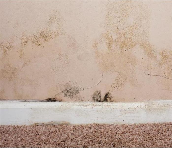 Mold Remediation Mold Damage Detection and Remediation Services in Amherst