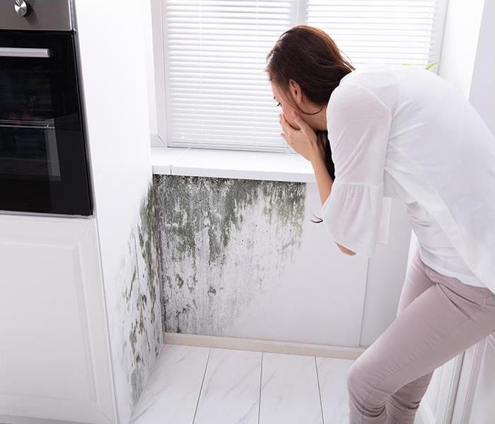 Mold Remediation Your Amherst Home Can Be Restored By Our Experts After A Mold Damage Disaster