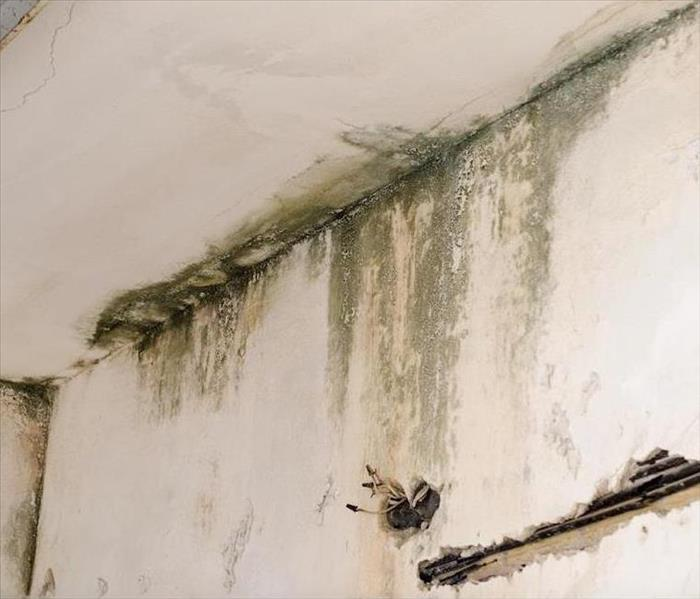 Mold Remediation Mold Damage Prevention and Restoration in Amherst