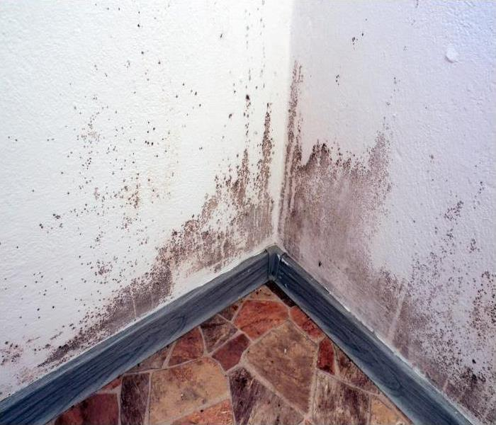 Mold Remediation Cleaning Out Mold Damage In Easthampton