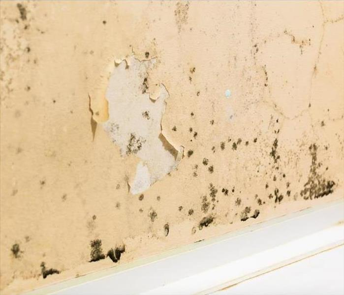 Mold Remediation How Effectively Can Professionals Remediate Mold Damage in Amherst?