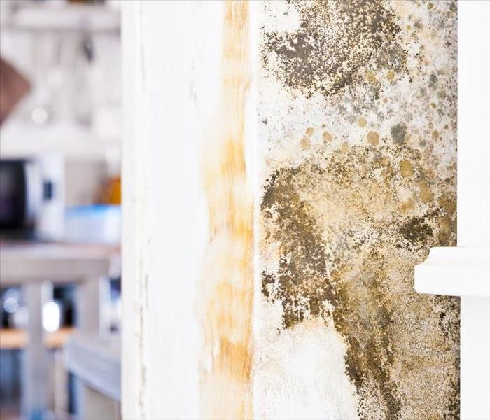 Mold Remediation How do Professionals Mitigate Mold Damage in Your Amherst Home?