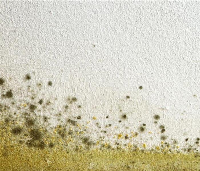 Why SERVPRO Mold Damage in Your Home? Trust SERVPRO to Remediate The Mess