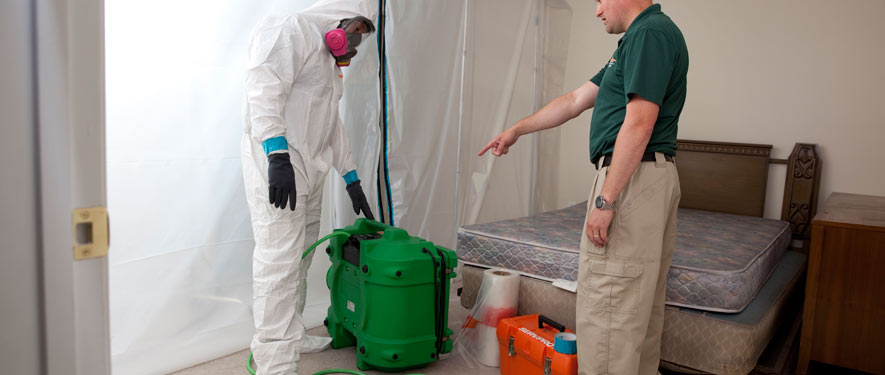 Northampton, MA mold removal process
